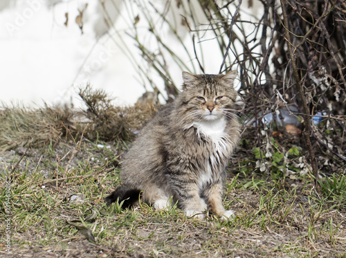 Stampa su Tela  wild street cat