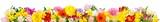 Fototapeta Kwiaty - Breite Bordüre aus bunten schönen Blumen, isoliert auf weiß