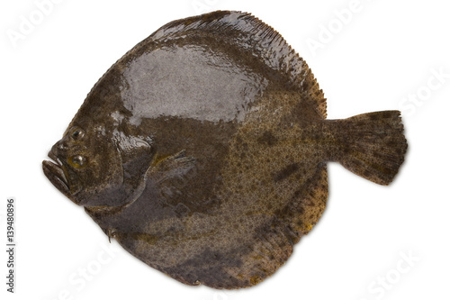 Cadres-photo bureau Poisson Turbot fish