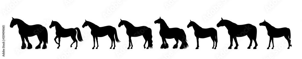 Fototapety, obrazy: Horse silhouette banner