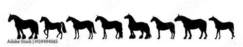 Fototapeta Horse silhouette banner obraz