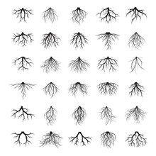 Big Set Of Roots And Element Of Trees. Vector Illustration.