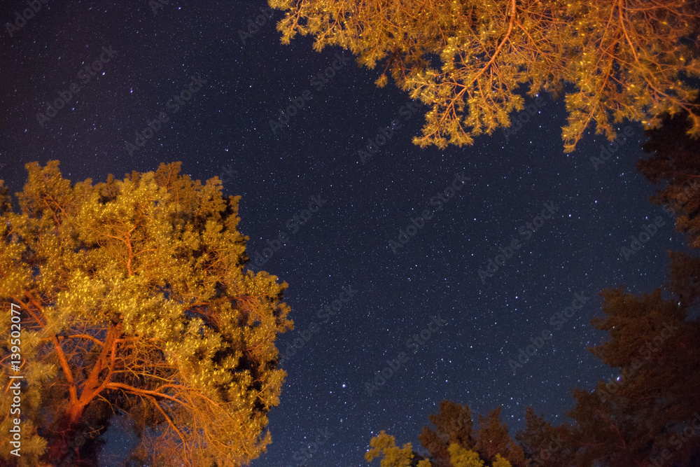 Starry sky with Milky way through trees
