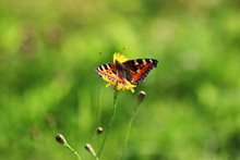 Butterfly On Grass