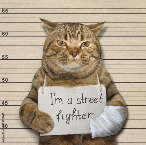The tough cat is a famous street fighter. He was arrested for this. Wall mural