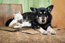 Stray Dog And Kittens. Dirty C...