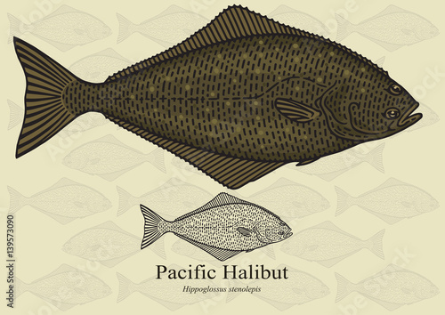 Pacific Halibut Fototapeta