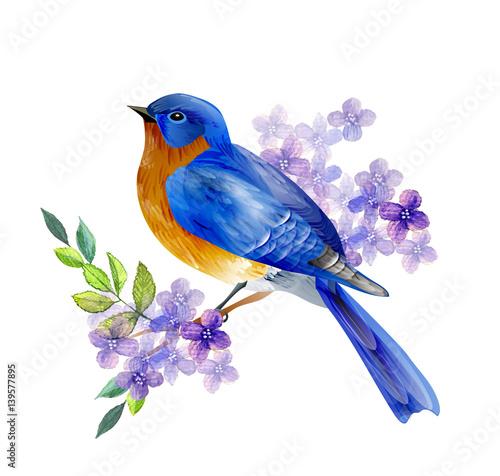 Photo  Bird of Spring vector
