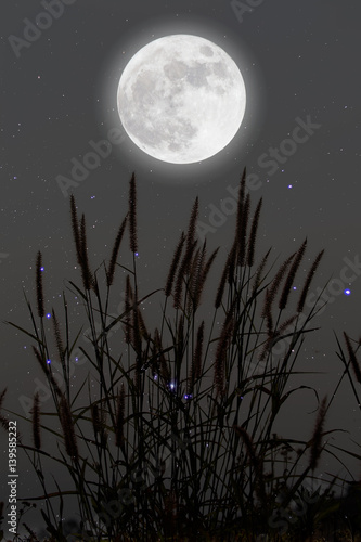 Fotografie, Obraz  Romantic Moon In Starry Night Over Grass.
