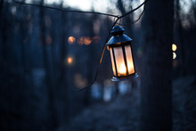 Lantern In The Wood