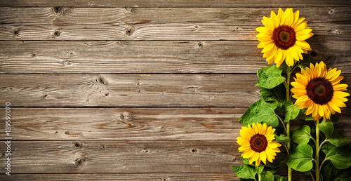 Foto op Canvas Zonnebloem sunflowers on wooden board
