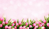Fototapeta Tulipany - Pink tulip flowers background