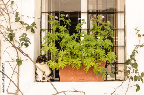 Cat in a window in Spain
