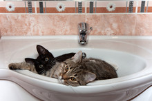 Two Cute Cats In The Sink In The Bathroom.