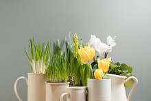 Spring Flowers In White Pots