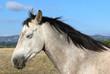 Domestic horse on a farm, Victoria, Australia