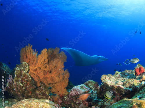 Staande foto Koraalriffen Manta Ray comes to cleaning station. Manta ray swims over coral reef with fish