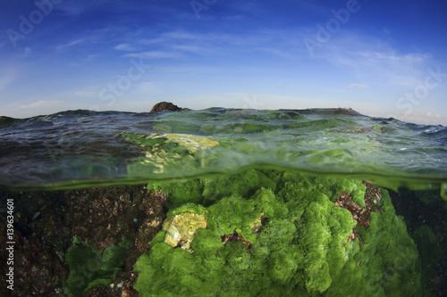 Plakat Zielone algi na podwodnych skałach w oceanie