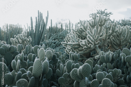 Photo  Cactus Garden