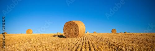 Spoed Foto op Canvas Platteland Champ de blé après la fauche