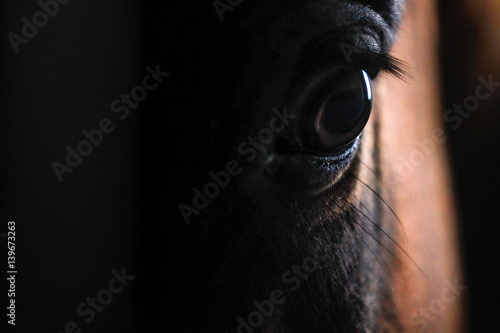 Horse's Eye - Buy this stock photo and explore similar