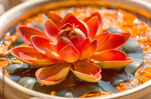 Photo Stands Water lilies Nelumbo flower known as Lotus. Sacred plant in Hinduism and Buddhism.