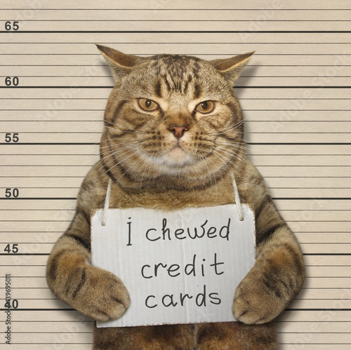 The handsome cat chewed credit cards. He was arrested for this. Wall mural
