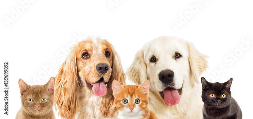 Poster Chien portrait dogs and kitten