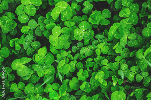 Beautiful background with green clover leaves for Saint Patrick's day