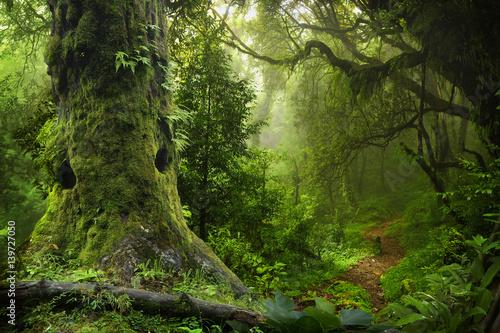 Fototapeta Nepal jungle obraz na płótnie