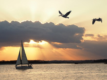 Sailboat Sails By As The Sun Sets And Pelican Fly