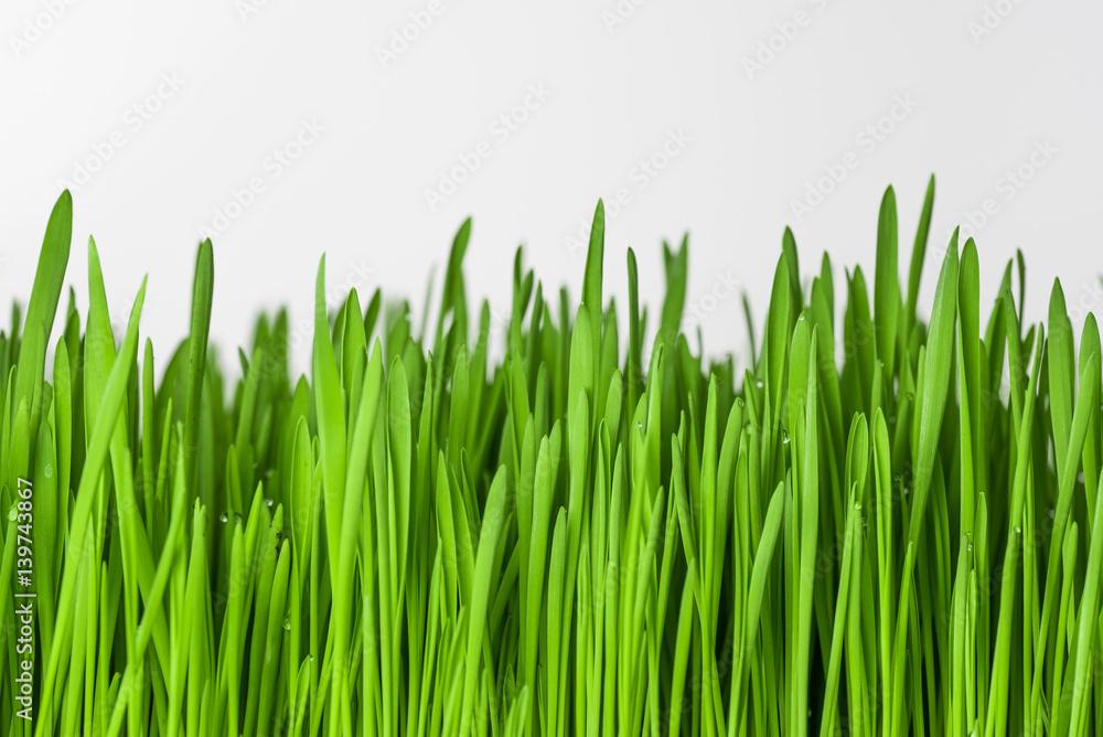 Fototapeta Zielona trawa na białym tle.