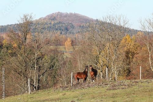 Obraz na plátně  View of Vlci hora with two horses, Czech Republic