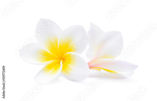 Poster Plumeria Tropical flowers frangipani (plumeria) isolated on white background