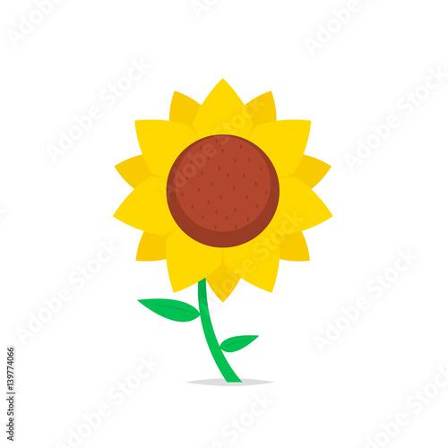 Fotografie, Obraz Sunflower isolated vector