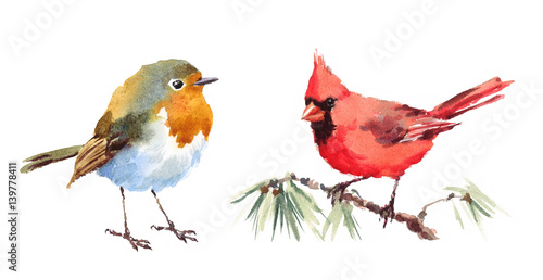 Photo  Northern Cardinal and Robin Two Birds Watercolor Hand Painted Illustration Set i