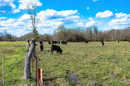 Valokuva  Barbed wire fenceline