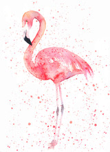 Watercolor Flamingo With Splas...