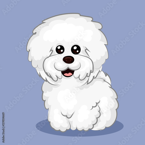 Fotografija white bichon frise dog at one color background