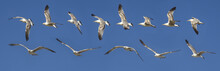 Seagull Flying Sequence Agains...