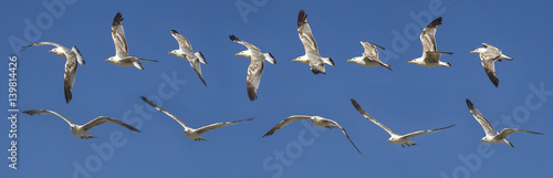 Fotografija Seagull flying sequence against blue sky