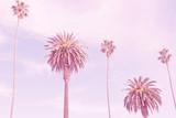 retro palmy kalifornijskie - 139815444