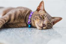 Happy Relaxed Cat Portrait - T...