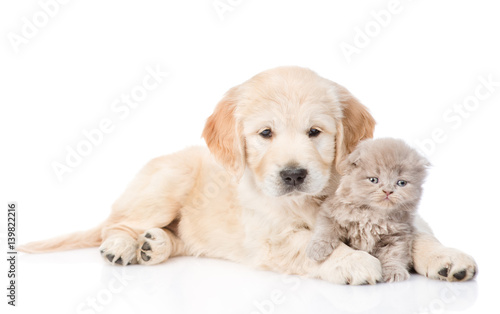 Spoed Foto op Canvas Hond Golden retriever puppy and tiny kitten together. isolated on white background