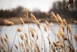 Piękna płocha jako tło przy wietrznym jeziorem - 139846262