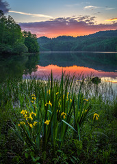 Obraz na Szkle Rzeki i Jeziora Wild Iris and summer sunset over a calm lake in the Appalachian Mountains of Kentucky