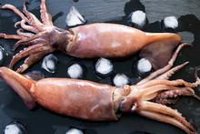 Oktopus Mit Eiswürfel