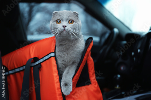 Pet carrier with cute cat in car Canvas Print