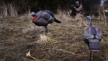 Turkey Hunting With Decoys