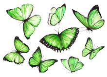 Many Green Butterflies. Watercolor Illustration